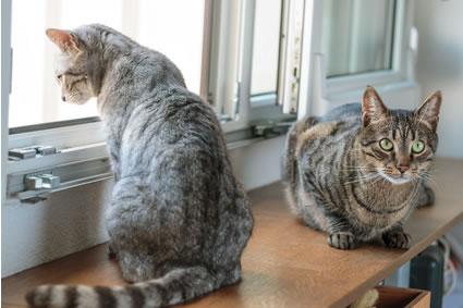 welche katze passt zu mir tipps zur auswahl der katzenrasse